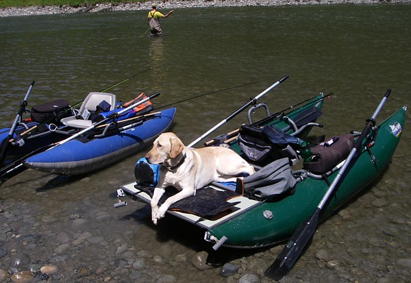 Fishing dog bo for Fly fishing pontoon